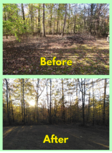 Limb_debris_removal_rockwell_nc_united_family_lawn_care_services